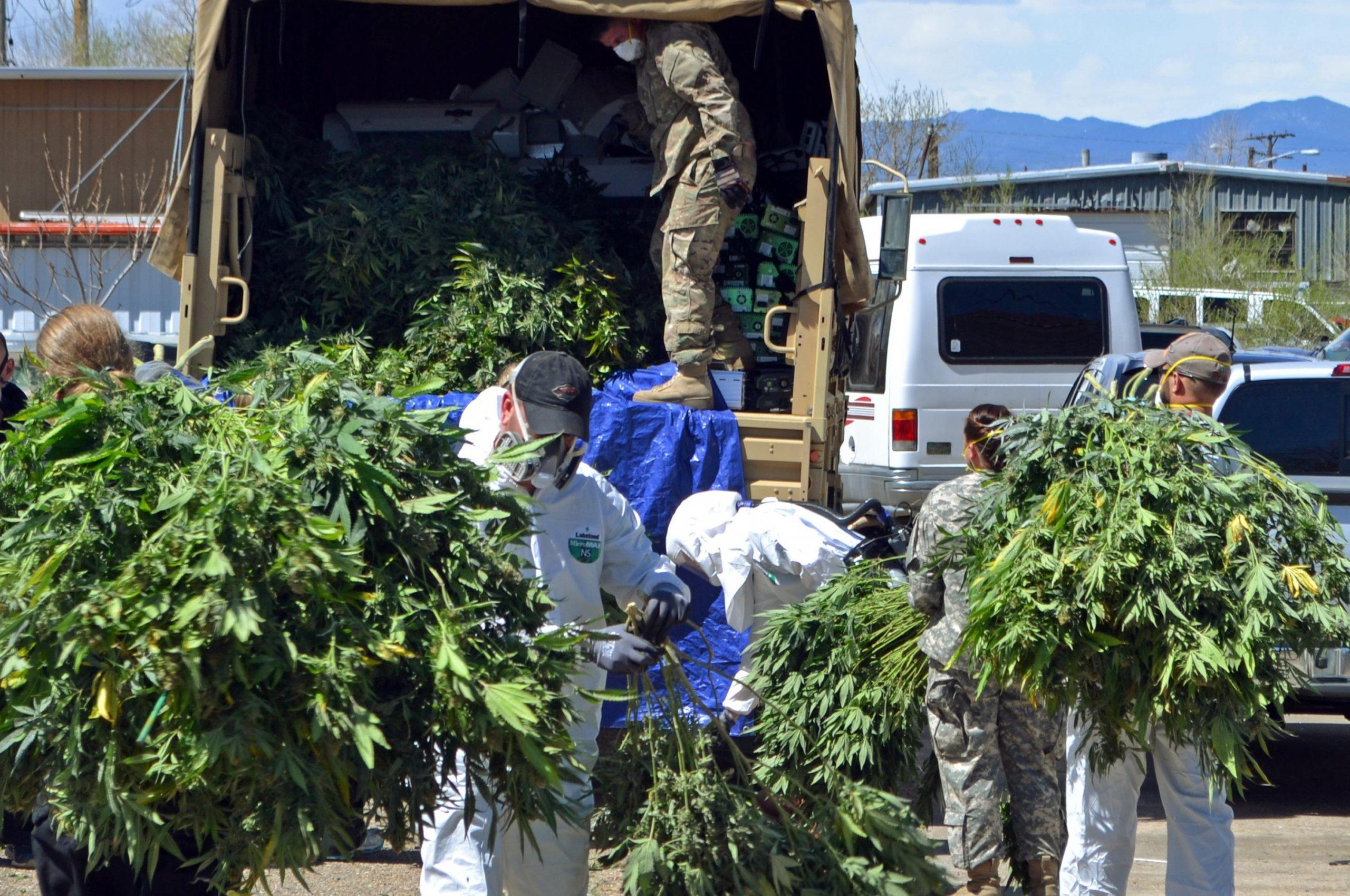 Marijuana_Raids